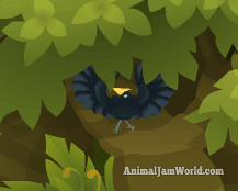 birds of paradise animal jam guide